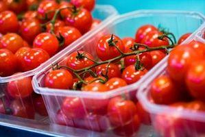 La planta de tomate se está secando como una ciruela pasa