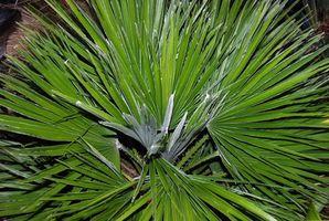 Lista de plantas protegidas en Florida