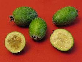 Los árboles de fruta tropical más resistente al frío