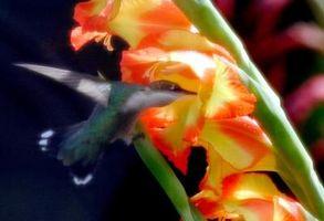 Las partes de la flor del gladiolo