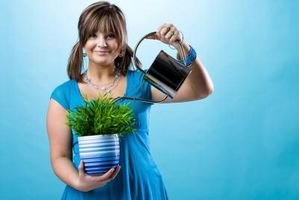 Cómo regar las plantas con agua alcalina o agua del grifo