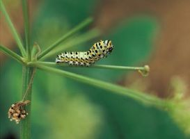 Hecho en casa del asesino de Caterpillar