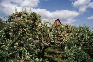 Ideales Distancias entre árboles frutales