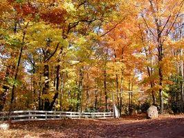 Michigan especies arbóreas y Enfermedades