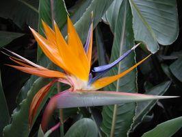 Flores tropicales de colores