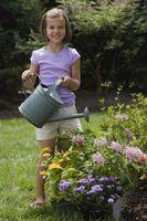 El agua que funciona mejor para las plantas