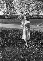 Es el árbol de la magnolia una conífera de hoja ancha o una?