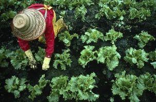 Los nombres de los pesticidas en los huertos
