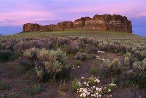 Las plantas altas del desierto en Oregon