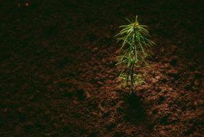 Tubos para árboles pequeños