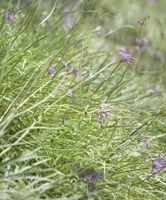 Las plantas silvestres que se pueden utilizar en el Estado de Nueva York