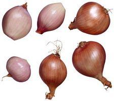 Cómo cultivar chalotes De la semilla
