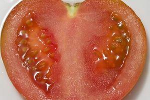 Cómo guardar las semillas del tomate para el próximo año