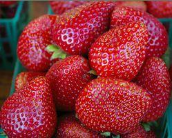 Planta de Alimentos lo necesito para mis fresas?