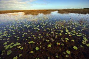 Diferencia entre plantas de agua y plantas de la tierra
