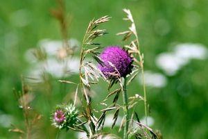 Herbicida es seguro y bueno para las plantas?