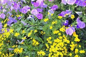 Cómo armar las plantas con flores
