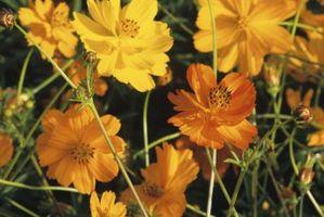 ¿Qué flores crecen en seco suelo duro en luz del sol?