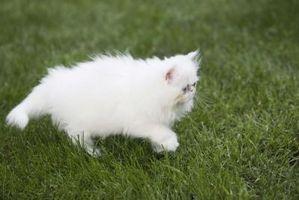 Cómo Obtener gato pis fuera de tela