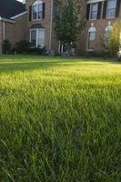El mejor de la hierba por un franco arenoso Yard