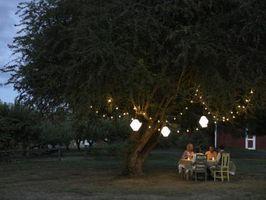 La iluminación del paisaje para los árboles