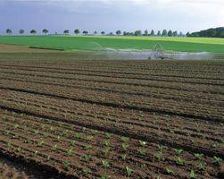 Los mejores métodos de control de malezas de la agricultura ecológica