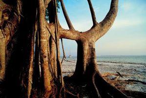 Las plantas que viven cerca de la costa
