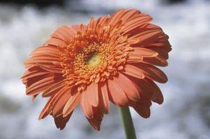Lista de plantas que requieren poca agua