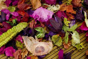 Cómo conservar las flores con gel de silicona