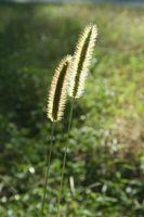 Lo que hace un Herbicida de muertes las malas hierbas?