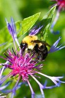¿Qué hace una abeja Flores igual?