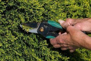 Ideas para Evergreen Coberturas en el patio delantero