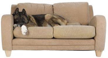 ¿Qué organismos o insectos podrían estar comiendo Mi sofá?