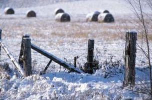 Los cultivos de cobertura que pueden ser sembradas en noviembre