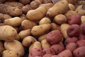 Cuando cavar patatas rojas?