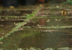 Los herbicidas que se pueden utilizar cerca del agua