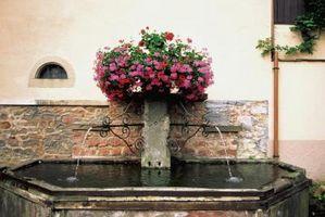 Flores y Centros de agua de la fuente