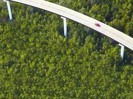 ¿Por qué debería crecer más plantas o árboles para reducir la erosión?