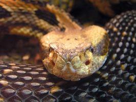 ¿Cómo deshacerse de las serpientes en un estanque
