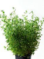 Las mejores hierbas que crecen en contenedores