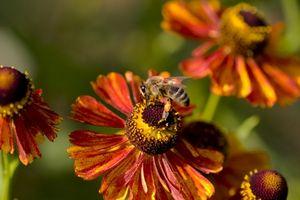 Los organismos que ayudan en la polinización de las flores