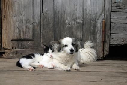 Cómo tratar las manchas de las mascotas