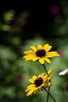 Lista de plantas perennes para la Zona Noreste