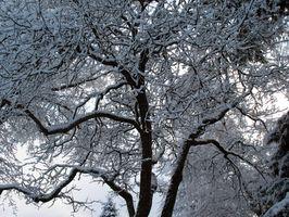 Los árboles frutales para 3b Hardiness