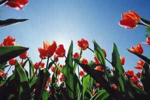 Fertilizantes para Mejorar Plantas de tallo largo