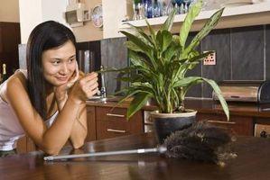 Agua jabonosa para los insectos en las plantas