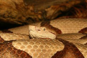 Remedios caseros para deshacerse de las serpientes