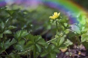 ¿Cómo funciona la luz del sol afecta el crecimiento de las plantas?