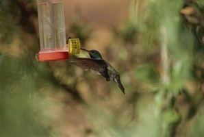 ¿Qué época del año ¿Usted pone Hummingbird alimentadores de salida en la zona 7?