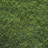 ¿Qué tipo de hierba crecerá en cortina total en Dallas, Texas?